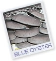 Blue Oyster  - Edible Culture