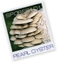 Pearl Oyster - Edible Culture
