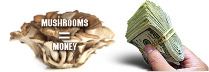 Mushrooms can make you money